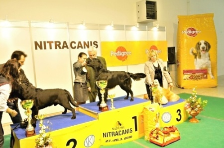 Flat Coated Retriever - Diesel Oasis of Peace Best in Group Nitra 2010