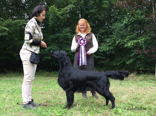 Flat Coated Retriever Caci´s Dark Chocolate of Love Lucky