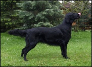 Flat Coated Retriever Dove Oasis of Peace
