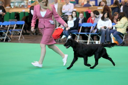 I believe in angels Oasis of Peace at Ronevorg on Cruft´s dog show 2015