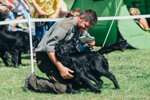 Flat Coated Retriever Keep Shining Oasis of Peace